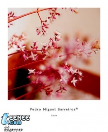 ดอก ไม้ งาม งาม ^_______________^