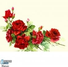 ภาพดอกไม้สวยๆครับ