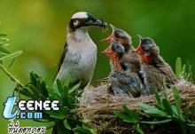 ลูกนก...ตัวแบบนี้เหรอ!!!
