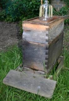 ผึ้ง...ทำรัง..ในขวด