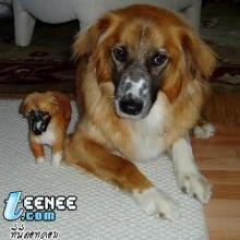 น้องหมาคู่เหมือน(saki)
