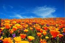 ทุ่งดอกไม้.....