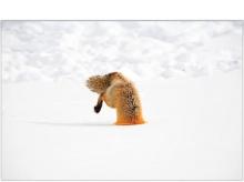 สุดยอดภาพที่สวยที่สุด จาก National Geographics1
