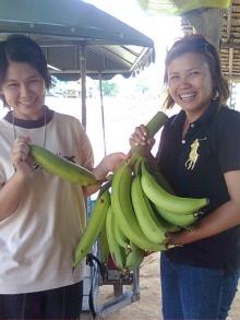 ~ กล้วยงาช้าง..ใหญ่เบ้อเริ่มเลย ~