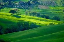 พักสายตากับท้องทุ่งสีเขียว