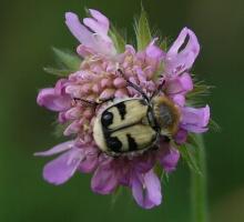 ความหลากหลายของแมลง # 2