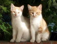 รูปแมวสวยๆ