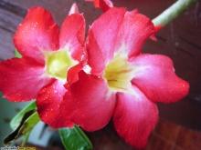 ดอกไม้ในกระถางที่บ้าน(หัดโพสค่ะ ซ้ำๆให้อภัยนะ)