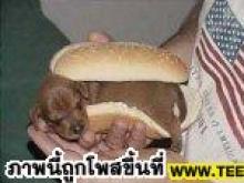 สยองอีกรอบพบเนื้อสุนักในแฮมเบอเก่อเวียดนาม