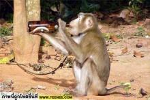 ข่าวด่วน !!!!  ลิงในสวนคลั่ง จับช้าง กิน