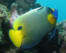 ป. ปลาสีสันสวยงาม