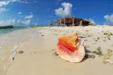 ความงามที่เรียบง่าย......เปลือกหอยตามธรรมชาติ