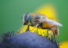 ..ผ.ผึ้งทำรัง ..(^_-)-☆