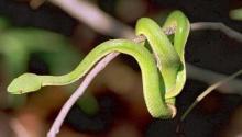 .. ง.งู ใจกล้า .. ⊙﹏⊙
