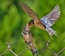 มาดูนกเค้าจับคู่กันค่ะ น่ารักเชียว ..(o^.^o)