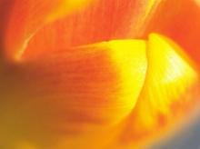 Macro Focus Flowers.•°•.° ღღღ