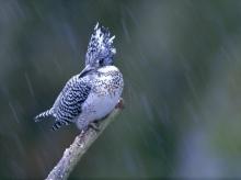 Lively Tiny Birds ●•.•°•.° (o^.^o) 2