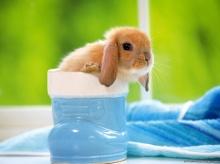 o--- แด่กระต่ายที่ฉันรัก ---o ( I )