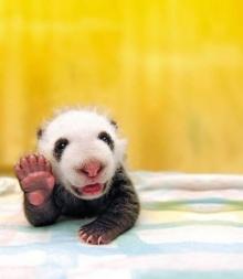 มุมน่ารักๆของสัตว์โลก