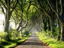 อุโมงค์ต้นไม้ อุโมงค์ต้นบีช ประเทศไอร์แลนด์