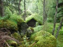 บ้านหลังคาสีเขียว ในประเทศนอร์เวย์