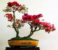 ความสง่างามอันน่าทึ่งของต้นไม้
