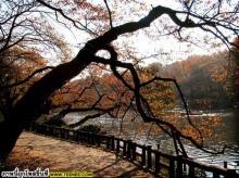 ภาพวิวสวย ๆที่ญี่ปุ่นจ้า