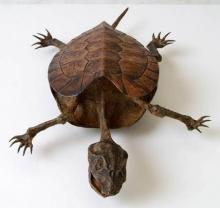 สัตว์แปลก จากพิพิธภัณฑ์ของแปลกญี่ปุ่น