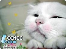 แมวน่ารัก น่ารัก