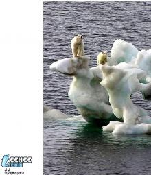ณ ขั้วโลก