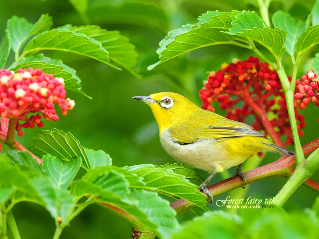 Wallpapers สวย Little Bird 246377