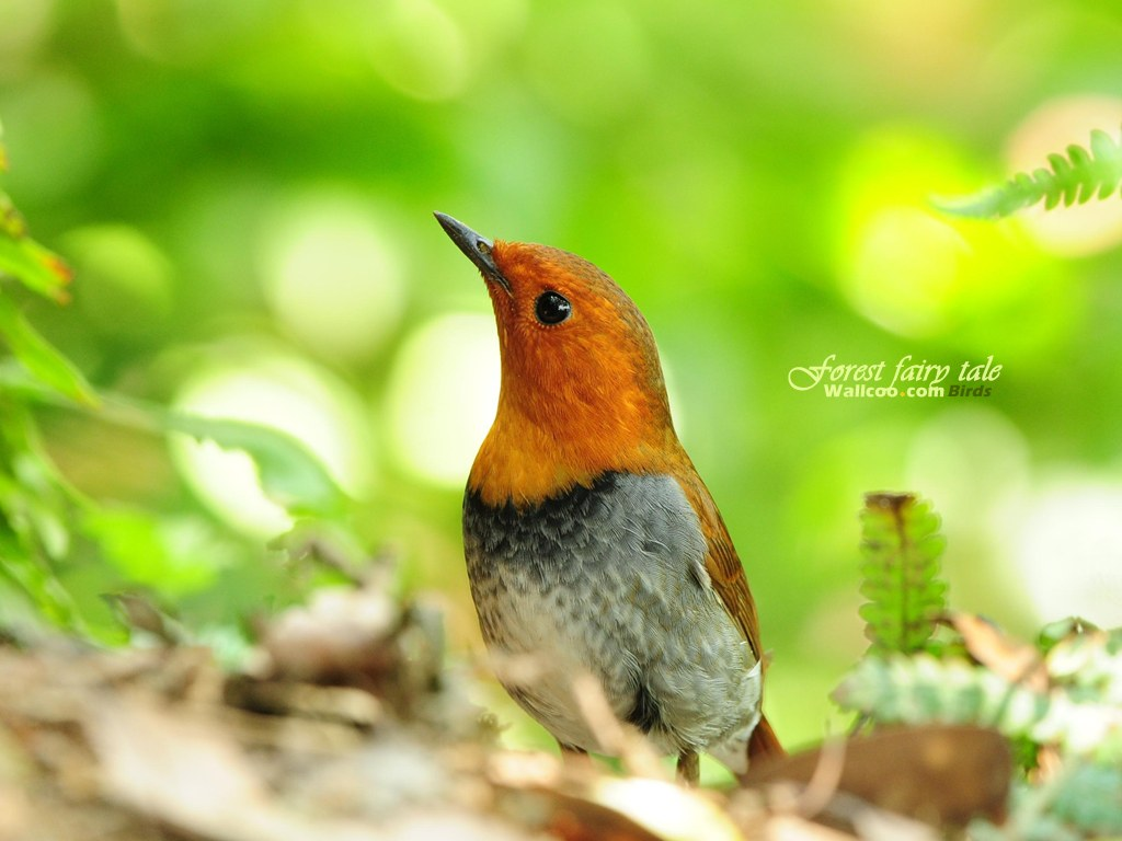 Wallpapers สวย Little Bird 246382