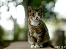 แมวใครหว่า..น่ารักจัง!!