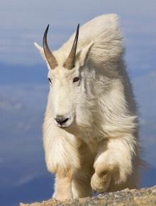 ความน่ารักของสัตว์ร่วมโลก