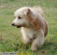 ประกาศสุนัขหาย มีรางวัลให้ 2000 บาท