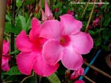 วอลเปเปอร์ดอกไม้สวยสดใสจ้า