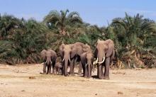 ช้าง ช้าง ช้าง ช้าง ช้าง...( Elephant )