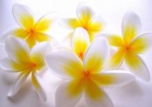 ดอกไม้ สวยสดชื่น