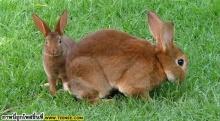 กระต่าย น่ารัก