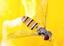 ..ผ.ผึ้งทำรัง ..2 (^_-)-☆