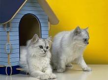 Luxurious Cat •:*´¨`*:• <( ̄︶ ̄)/ 2