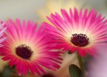 ดอกไม้ยามเช้า  `•.¸ ¸.•´ (o^.^o) 2