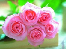 Roses_Symbol of Indispensable Love .•°•.° ღღღ Part 2/2