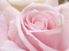 Macro Focus Flowers.•°•.° ღღღ 2
