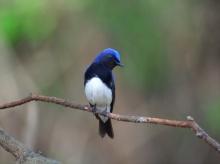 Lively Tiny Birds ●•.•°•.° (o^.^o) 3
