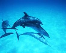 Funny Dolphin•°•.° ღ.