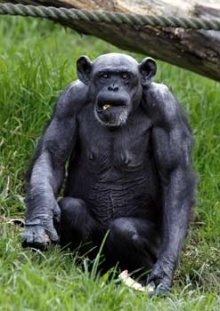 ลิงน้อย...ผู้น่ารัก!!!