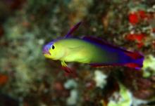 ฝูงปลาสวยๆและโลกใต้ทะเล