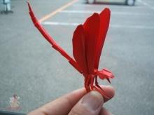 แมลงกระดาษ 1