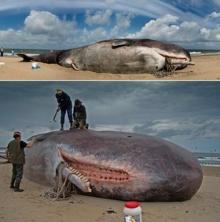 รูปปั้นปลาวาฬยักษ์ ทำซะเนียนเลย